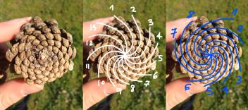 fibonacci_26139039305_o